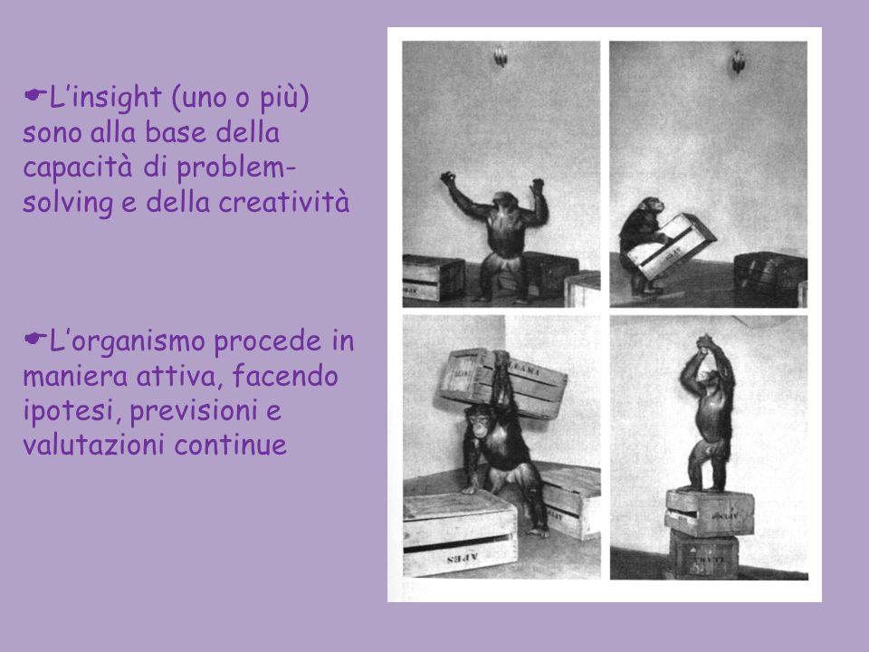 Linsight (uno o più) sono alla base della capacità di problem- solving e della creatività Lorganismo procede in maniera attiva, facendo ipotesi, previ