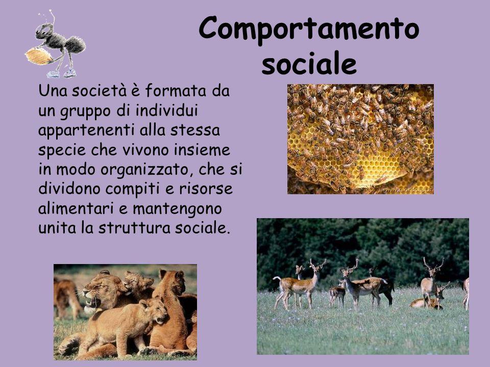 Comportamento sociale Una società è formata da un gruppo di individui appartenenti alla stessa specie che vivono insieme in modo organizzato, che si d
