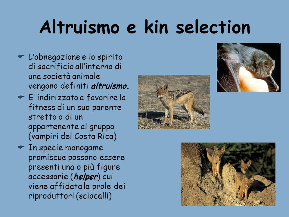 Altruismo e kin selection Labnegazione e lo spirito di sacrificio allinterno di una società animale vengono definiti altruismo. E indirizzato a favori