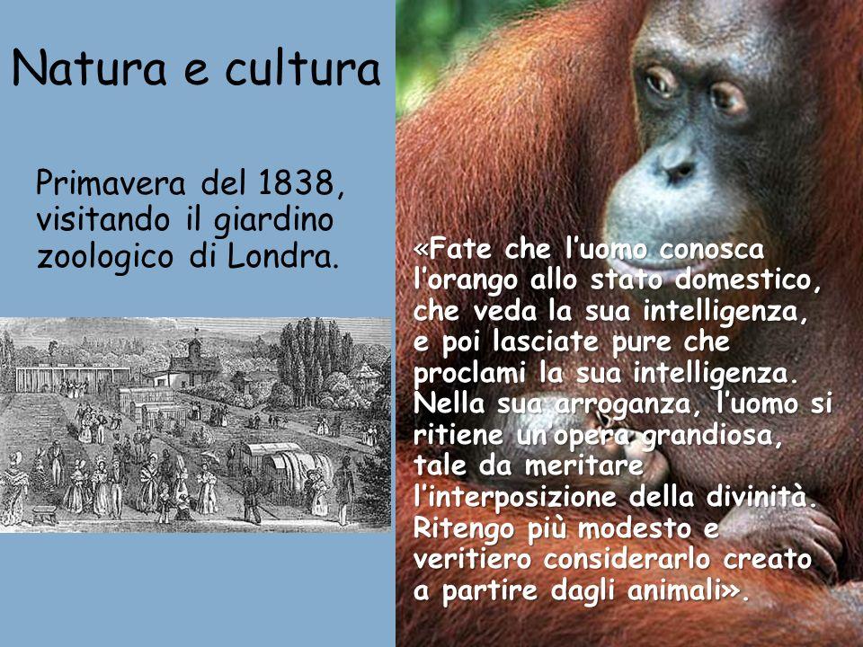 Natura e cultura Primavera del 1838, visitando il giardino zoologico di Londra. «Fate che luomo conosca lorango allo stato domestico, che veda la sua
