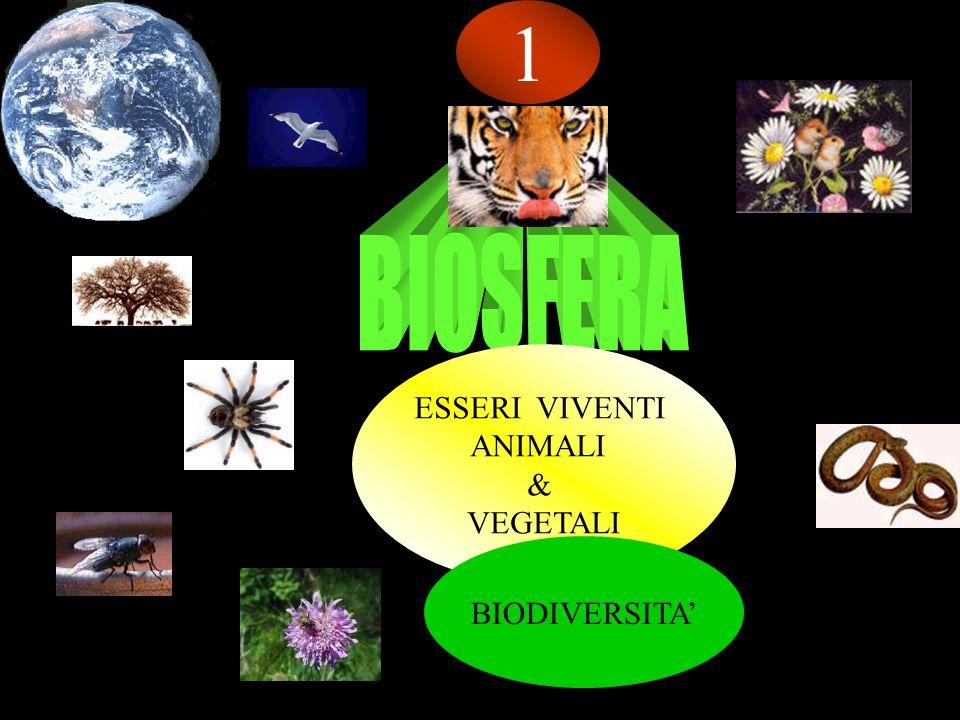 ESSERI VIVENTI ANIMALI & VEGETALI 1 BIODIVERSITA