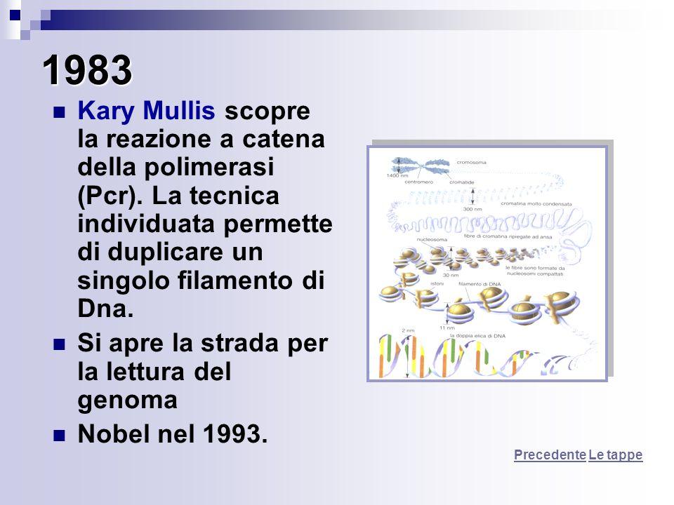 1983 Kary Mullis scopre la reazione a catena della polimerasi (Pcr). La tecnica individuata permette di duplicare un singolo filamento di Dna. Si apre
