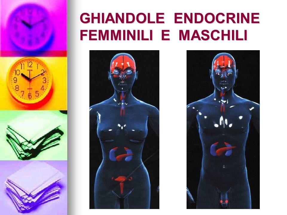 GHIANDOLE ENDOCRINE FEMMINILI E MASCHILI