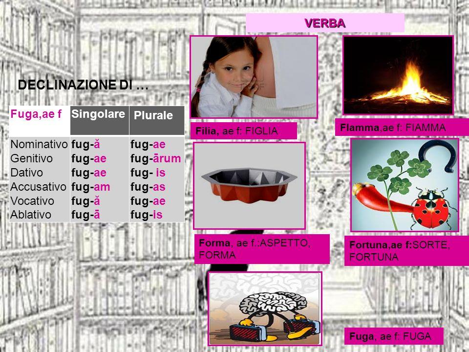 DECLINAZIONE DI … herba, ae fSingolare Plurale Nominativo Genitivo Dativo Accusativo Vocativo Ablativo herb-ă herb-ae herb-ae herb-am herb-ă herb-ā herb-ae herb-ārum herb-is herb-as herb-ae herb-is Gloria, ae, f.: GLORIA Herba, ae, f.: ERBA, STELO, GERMOGLIO Hora, ae, f.: ORA Gratia, ae, f..: FAVORE,, RINGRAZIAMENTO Iniuria, ae, f.: OFFESA, INGIUSTIZIA VERBA