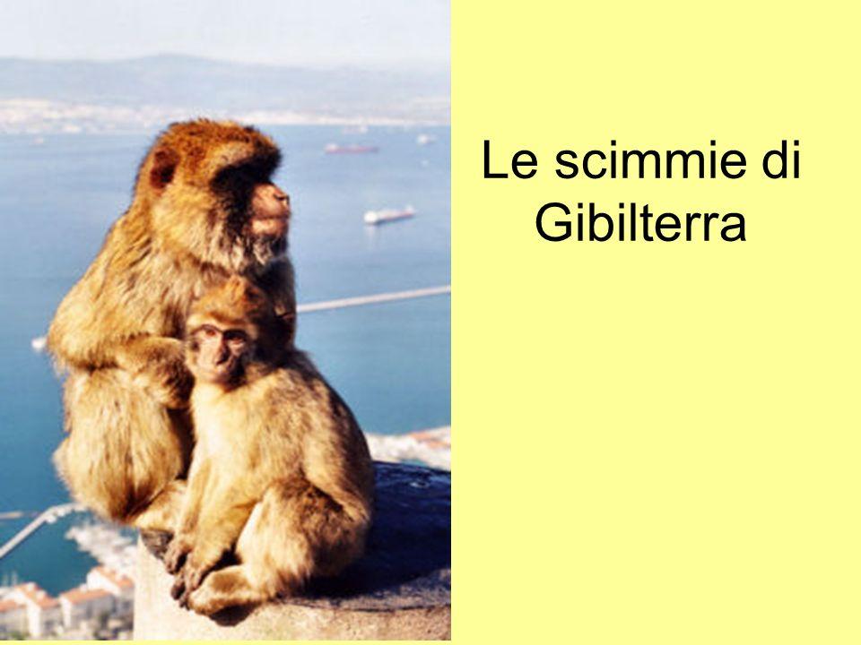 Le scimmie di Gibilterra