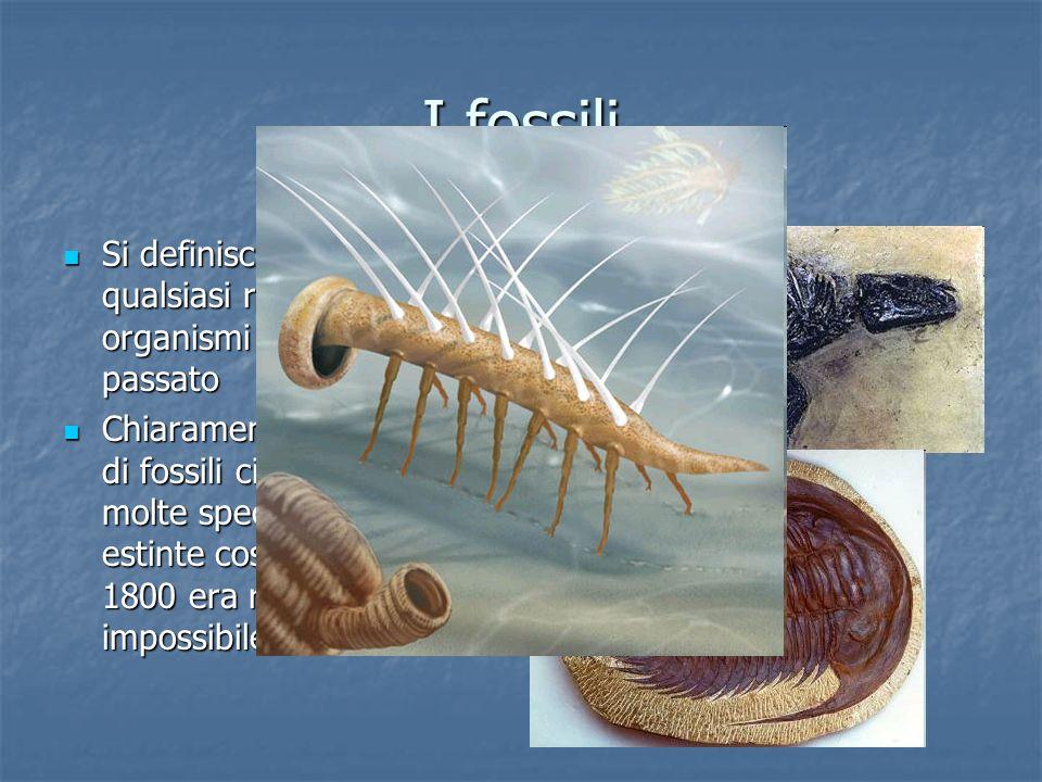 I fossili Si definisce fossile qualsiasi resto o traccia di organismi vissuti nel passato Si definisce fossile qualsiasi resto o traccia di organismi