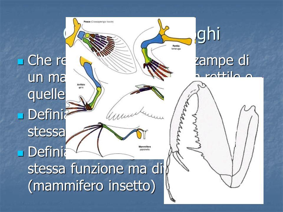 Omologhi e analoghi Che relazione esiste fra le zampe di un mammifero, quelle di un rettile e quelle di un insetto? Che relazione esiste fra le zampe