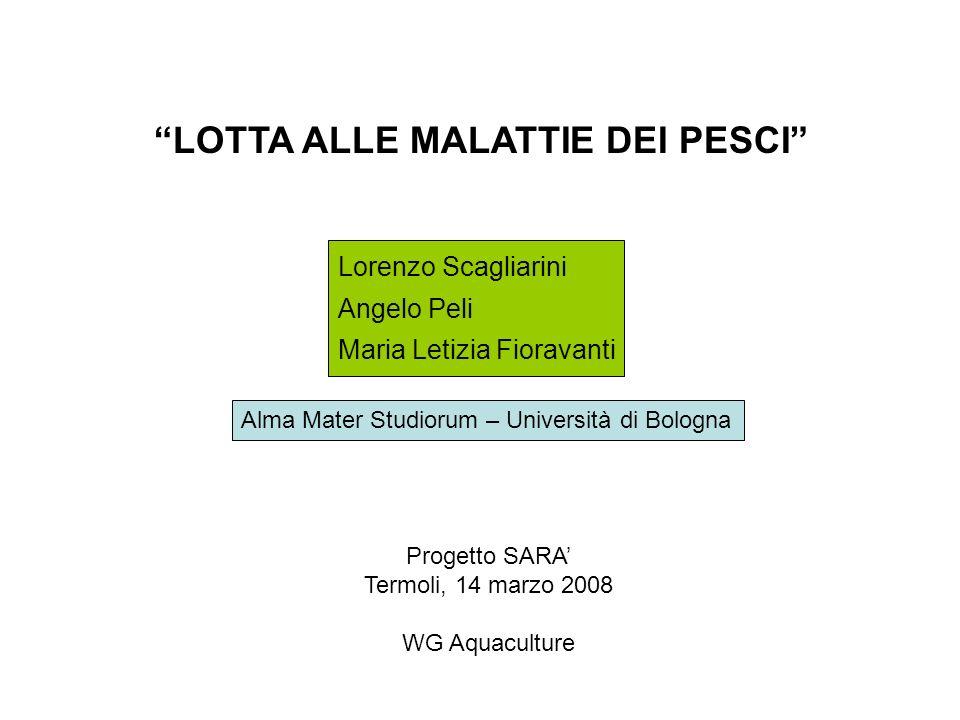 LOTTA ALLE MALATTIE DEI PESCI Lorenzo Scagliarini Angelo Peli Maria Letizia Fioravanti Progetto SARA Termoli, 14 marzo 2008 WG Aquaculture Alma Mater