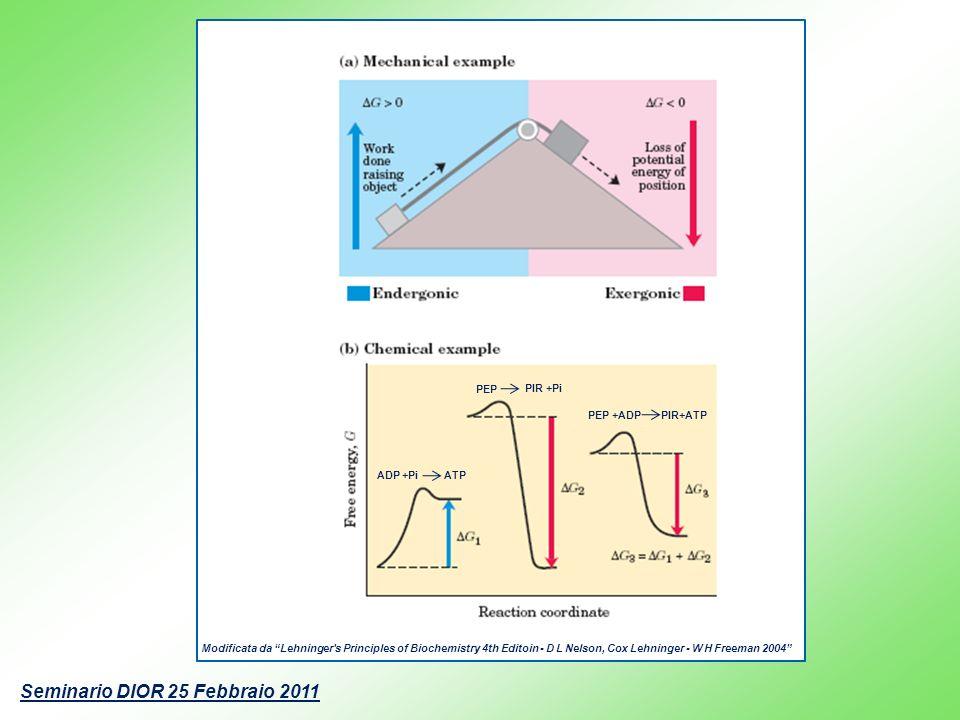 Modificata da Lehninger's Principles of Biochemistry 4th Editoin - D L Nelson, Cox Lehninger - W H Freeman 2004 ADP +Pi ATP PEP +ADP PIR+ATP PEP PIR +