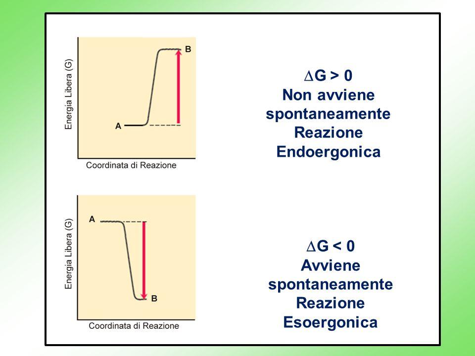 G > 0 Non avviene spontaneamente Reazione Endoergonica G < 0 Avviene spontaneamente Reazione Esoergonica
