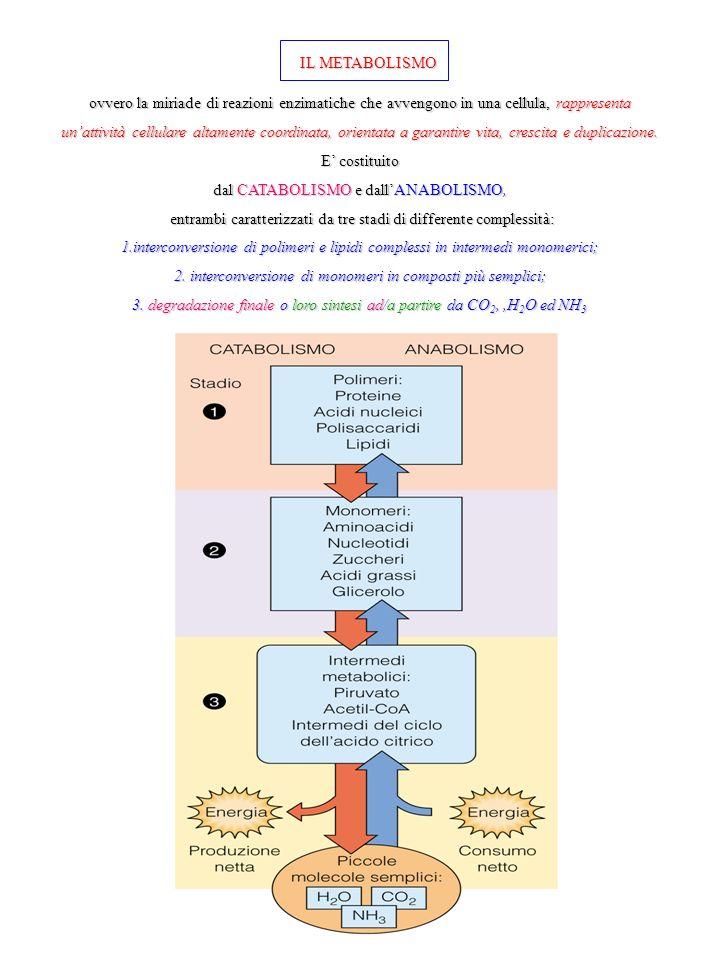 IL METABOLISMO ovvero la miriade di reazioni enzimatiche che avvengono in una cellula, rappresenta unattività cellulare altamente coordinata, orientata a garantire vita, crescita e duplicazione.