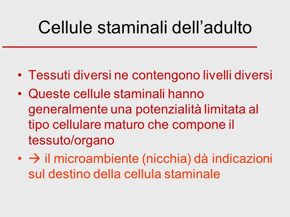 Cellule staminali delladulto Tessuti diversi ne contengono livelli diversi Queste cellule staminali hanno generalmente una potenzialità limitata al ti