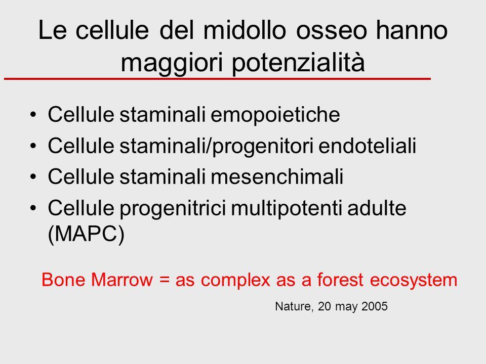 Le cellule del midollo osseo hanno maggiori potenzialità Cellule staminali emopoietiche Cellule staminali/progenitori endoteliali Cellule staminali me