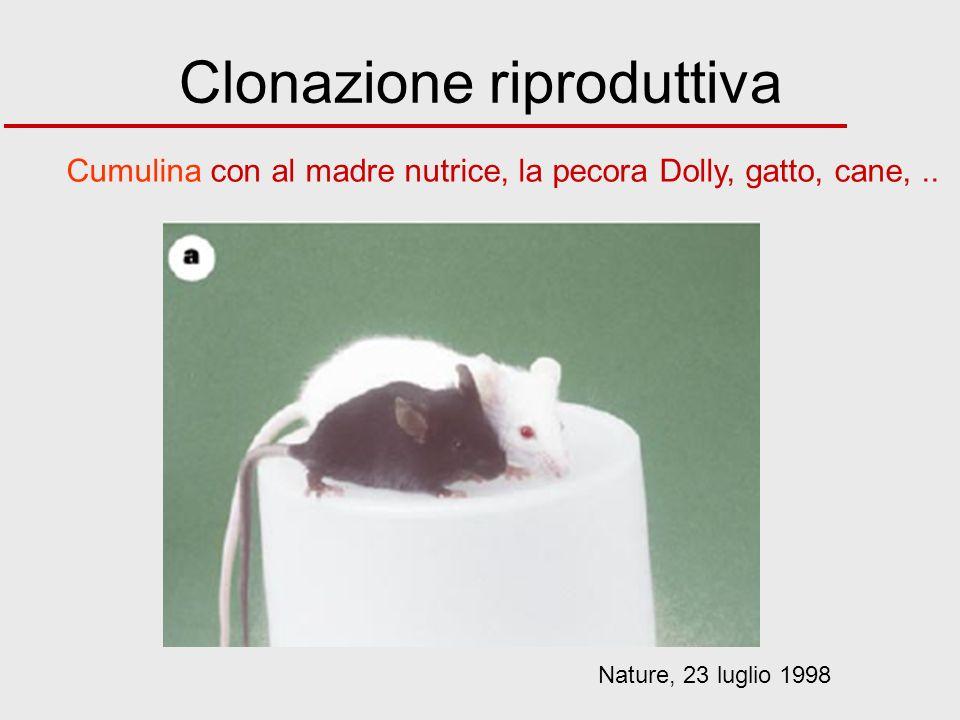 Clonazione riproduttiva Nature, 23 luglio 1998 Cumulina con al madre nutrice, la pecora Dolly, gatto, cane,..