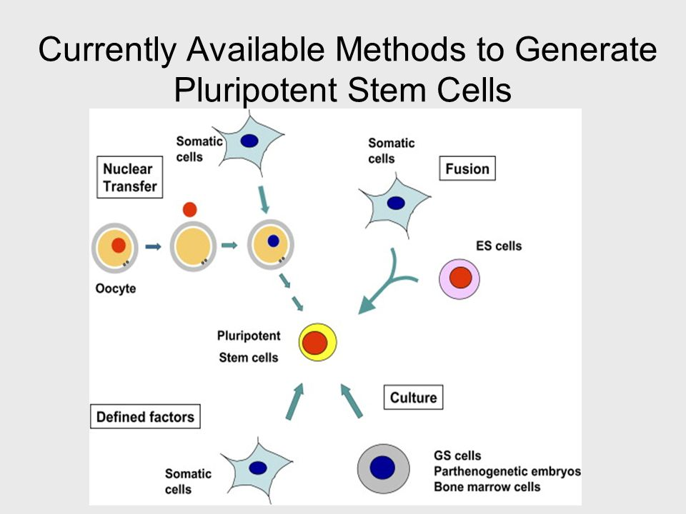 Currently Available Methods to Generate Pluripotent Stem Cells
