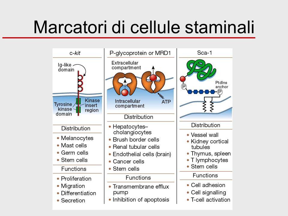 Marcatori di cellule staminali