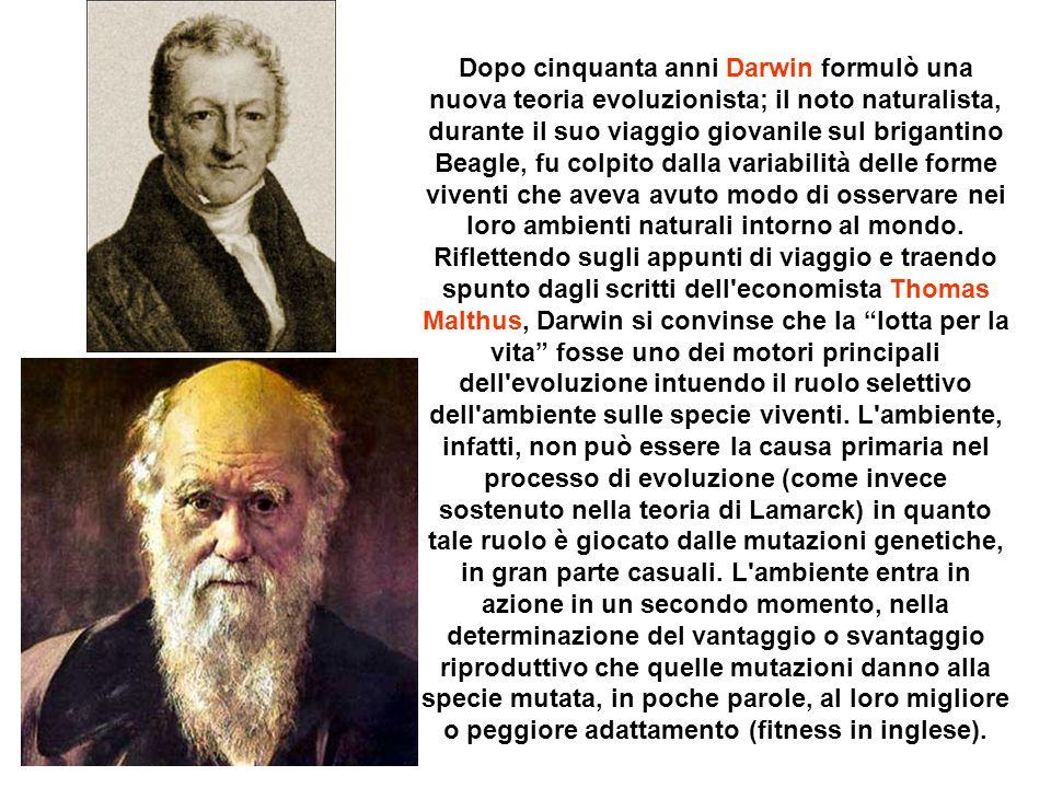 Dopo cinquanta anni Darwin formulò una nuova teoria evoluzionista; il noto naturalista, durante il suo viaggio giovanile sul brigantino Beagle, fu col
