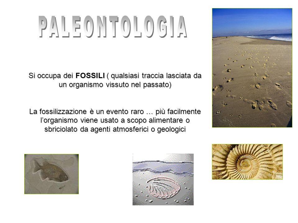Si occupa dei FOSSILI ( qualsiasi traccia lasciata da un organismo vissuto nel passato) La fossilizzazione è un evento raro … più facilmente lorganism