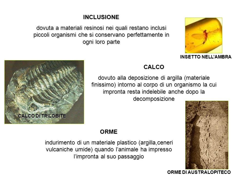 INCLUSIONE dovuta a materiali resinosi nei quali restano inclusi piccoli organismi che si conservano perfettamente in ogni loro parte CALCO dovuto all