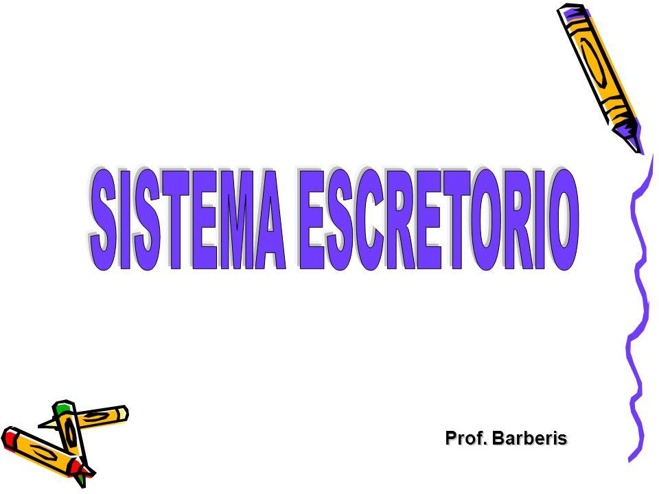 Prof. Barberis