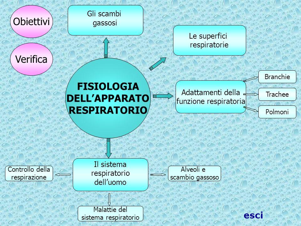 Controllo della respirazione Adattamenti della funzione respiratoria FISIOLOGIA DELLAPPARATO RESPIRATORIO Trachee Polmoni Branchie Il sistema respirat