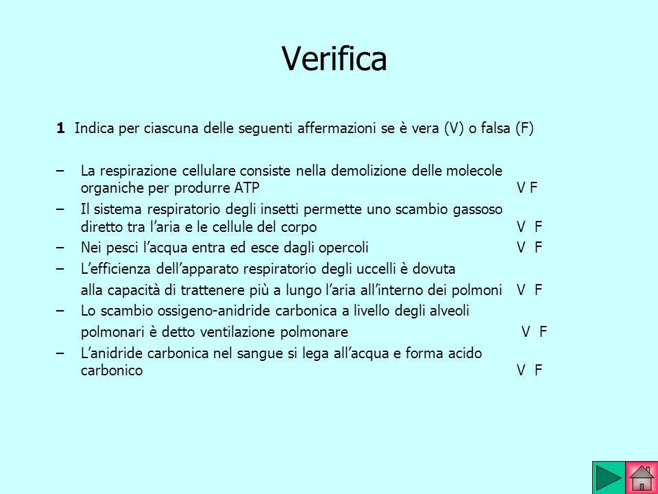 Verifica 1 Indica per ciascuna delle seguenti affermazioni se è vera (V) o falsa (F) –La respirazione cellulare consiste nella demolizione delle molec