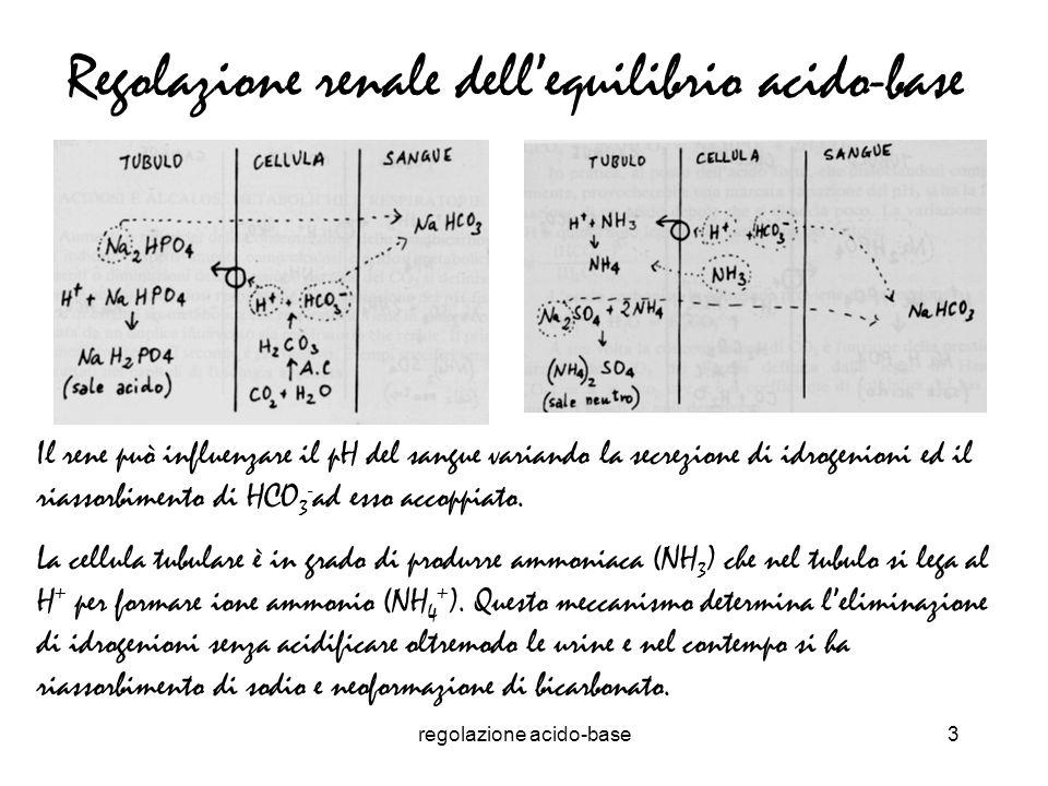regolazione acido-base4 Regolazione respiratoria dellequilibrio acido-base La risposta ventilatoria dellequilibrio acido-base è prontamente scatenata dalla variazione del pH ematico Lattività respiratoria è in grado di controllare lequilibrio acido-base modificando la ventilazione alveolare e quindi la pressione parziale di CO 2 Per un certo valore di V CO2 una variazione della ventilazione alveolare modifica di conseguenza la pressione parziale di CO 2 Va =V CO2 /Pa CO2 Pa CO2 = V CO2 /Va