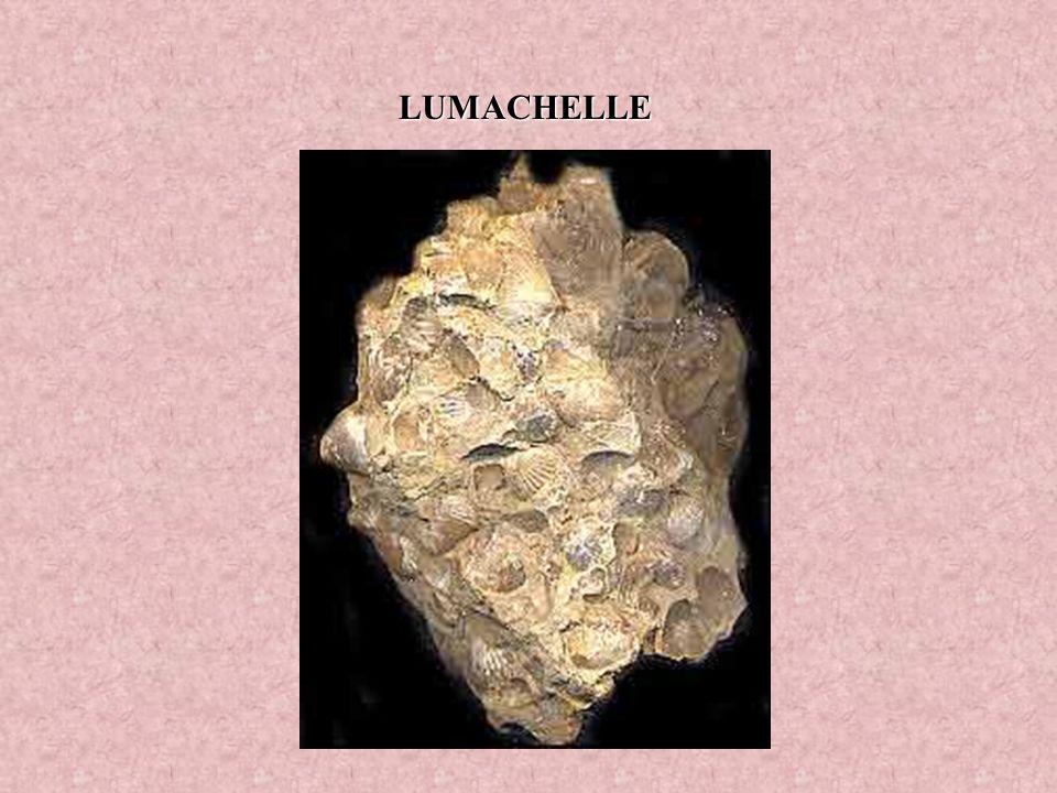 LUMACHELLE