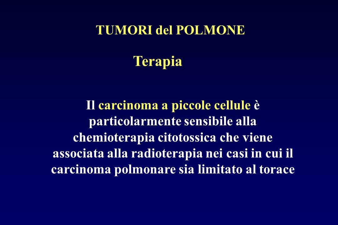 Terapia Il carcinoma a piccole cellule è particolarmente sensibile alla chemioterapia citotossica che viene associata alla radioterapia nei casi in cu
