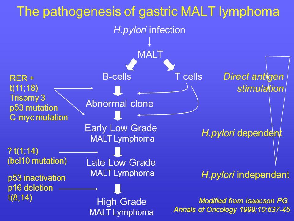 The pathogenesis of gastric MALT lymphoma H.pylori infection B-cellsT cells Abnormal clone Early Low Grade MALT Lymphoma Late Low Grade MALT Lymphoma High Grade MALT Lymphoma H.pylori dependent H.pylori independent Direct antigen stimulation RER + t(11;18) Trisomy 3 p53 mutation C-myc mutation .