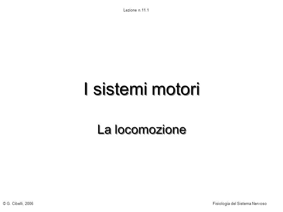 I sistemi motori La locomozione © G. Cibelli, 2006Fisiologia del Sistema Nervoso Lezione n.11.1