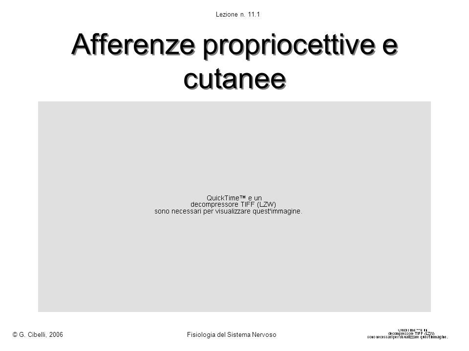 Afferenze propriocettive e cutanee © G. Cibelli, 2006 Fisiologia del Sistema Nervoso Lezione n. 11.1