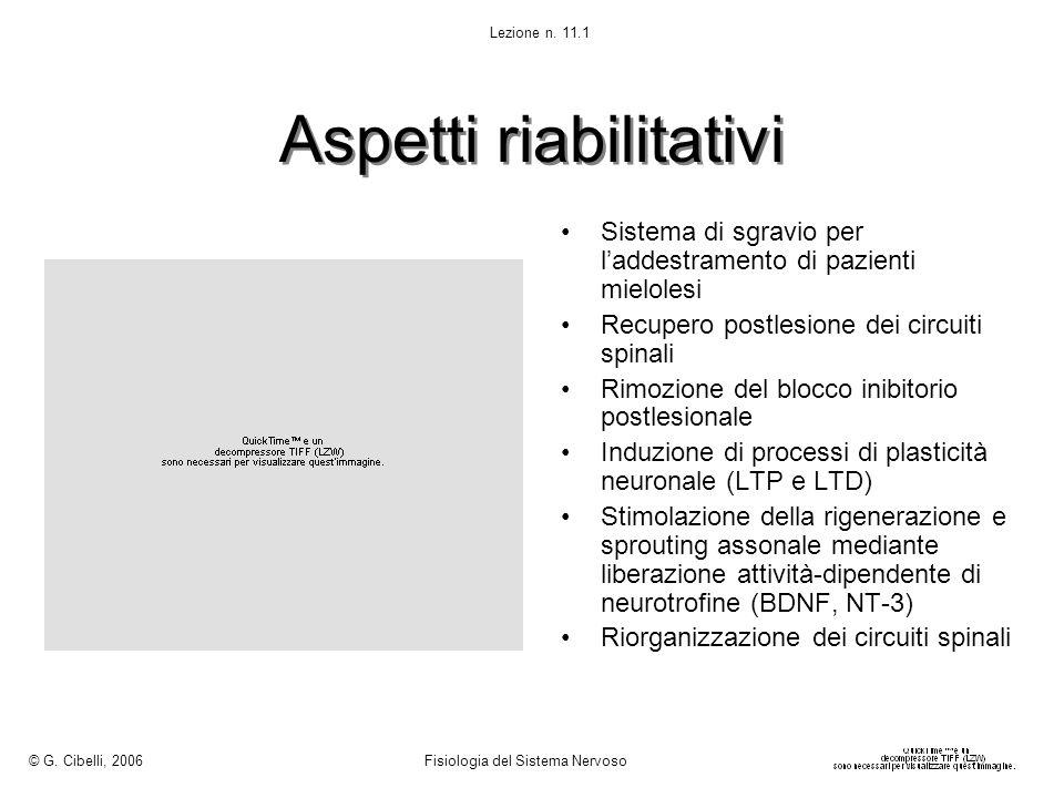 Aspetti riabilitativi Sistema di sgravio per laddestramento di pazienti mielolesi Recupero postlesione dei circuiti spinali Rimozione del blocco inibi