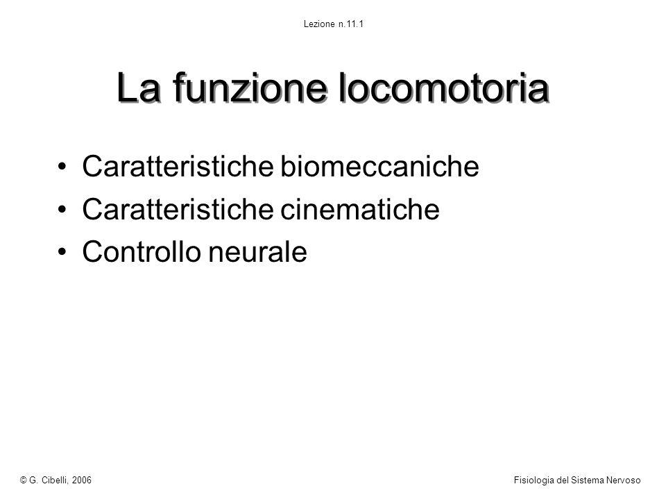 La funzione locomotoria Caratteristiche biomeccaniche Caratteristiche cinematiche Controllo neurale © G. Cibelli, 2006Fisiologia del Sistema Nervoso L