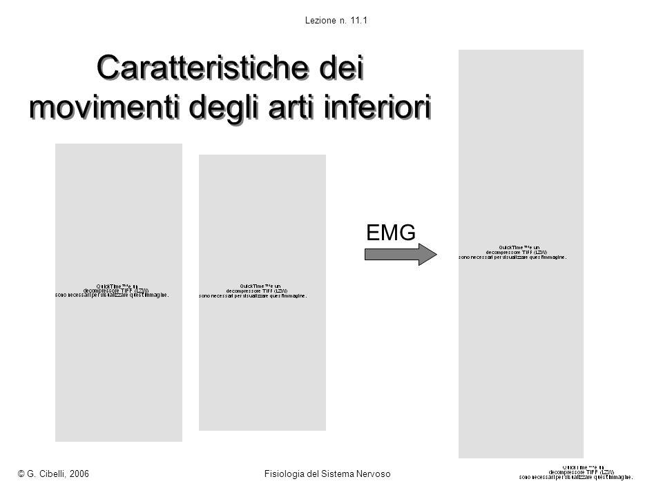 Caratteristiche dei movimenti degli arti inferiori © G. Cibelli, 2006 Fisiologia del Sistema Nervoso Lezione n. 11.1 EMG