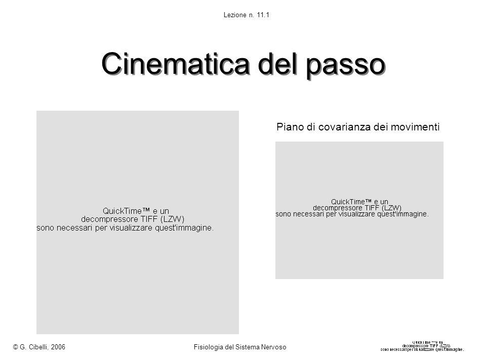 Cinematica del passo © G. Cibelli, 2006 Fisiologia del Sistema Nervoso Lezione n. 11.1 Piano di covarianza dei movimenti