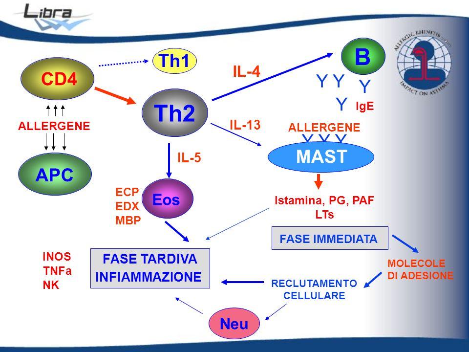 APC ALLERGENE Th1 Th2 Eos IL-5 B IL-4 Y Y Y Y Y IgE MAST IL-13 ECP EDX MBP CD4 FASE IMMEDIATA Istamina, PG, PAF LTs MOLECOLE DI ADESIONE ALLERGENE iNO