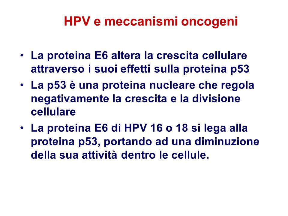 HPV e meccanismi oncogeni La proteina E6 altera la crescita cellulare attraverso i suoi effetti sulla proteina p53 La p53 è una proteina nucleare che
