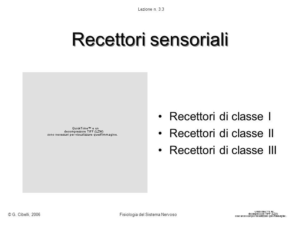 Recettori sensoriali Recettori di classe I Recettori di classe II Recettori di classe III © G. Cibelli, 2006 Fisiologia del Sistema Nervoso Lezione n.
