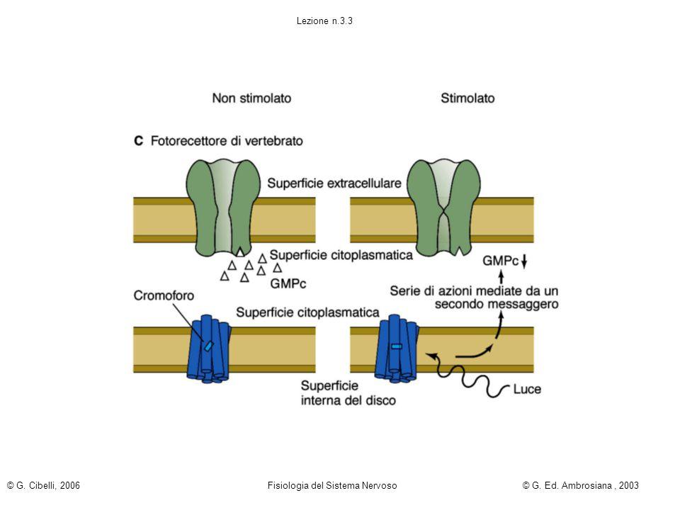 Lezione n.3.3 © G. Cibelli, 2006 Fisiologia del Sistema Nervoso© G. Ed. Ambrosiana, 2003