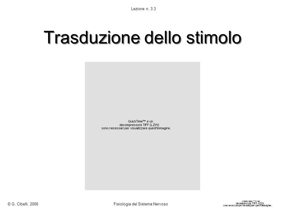 Trasduzione dello stimolo © G. Cibelli, 2006 Fisiologia del Sistema Nervoso Lezione n. 3.3