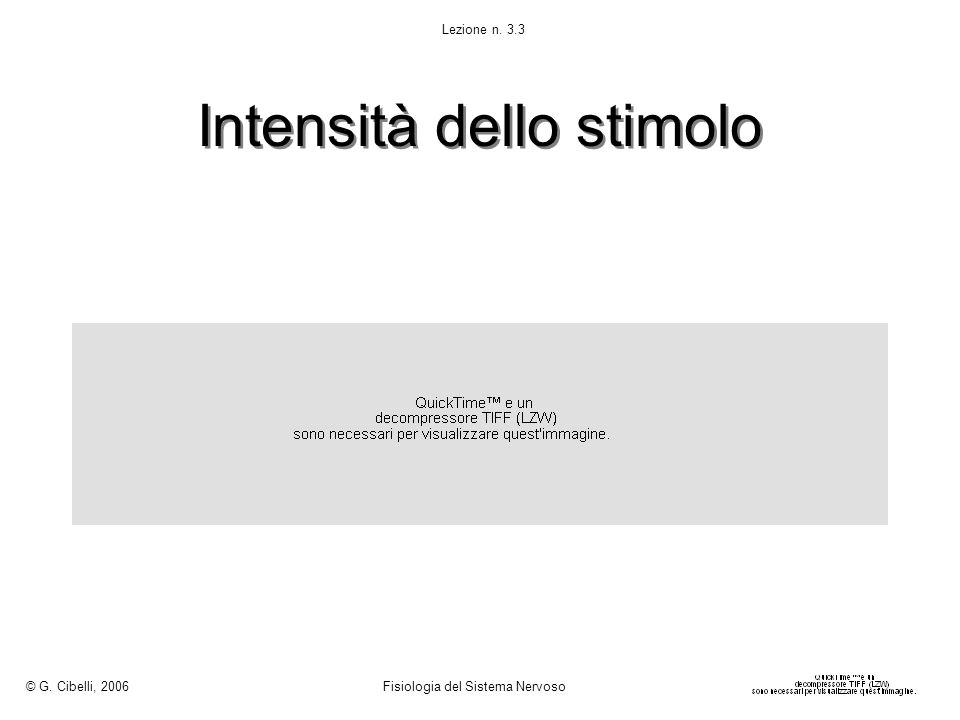 Intensità dello stimolo © G. Cibelli, 2006 Fisiologia del Sistema Nervoso Lezione n. 3.3