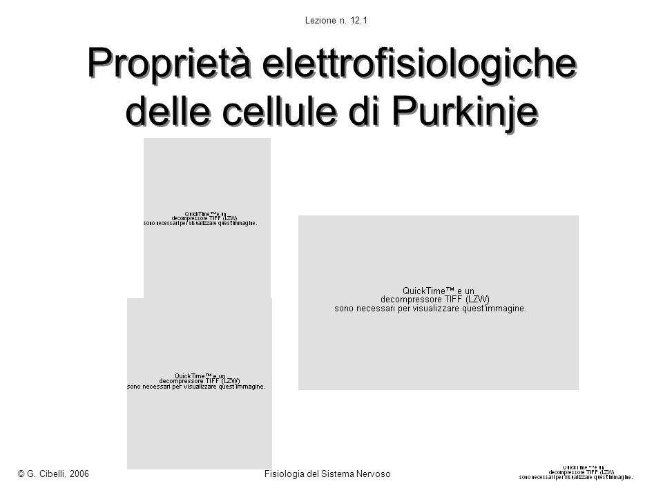 Proprietà elettrofisiologiche delle cellule di Purkinje © G. Cibelli, 2006 Fisiologia del Sistema Nervoso Lezione n. 12.1