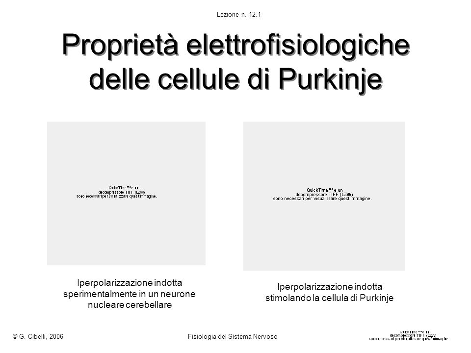Proprietà elettrofisiologiche delle cellule di Purkinje Iperpolarizzazione indotta sperimentalmente in un neurone nucleare cerebellare Iperpolarizzazi