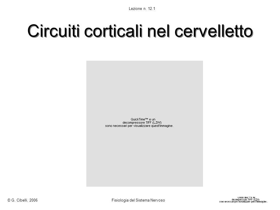 Circuiti corticali nel cervelletto © G. Cibelli, 2006 Fisiologia del Sistema Nervoso Lezione n. 12.1