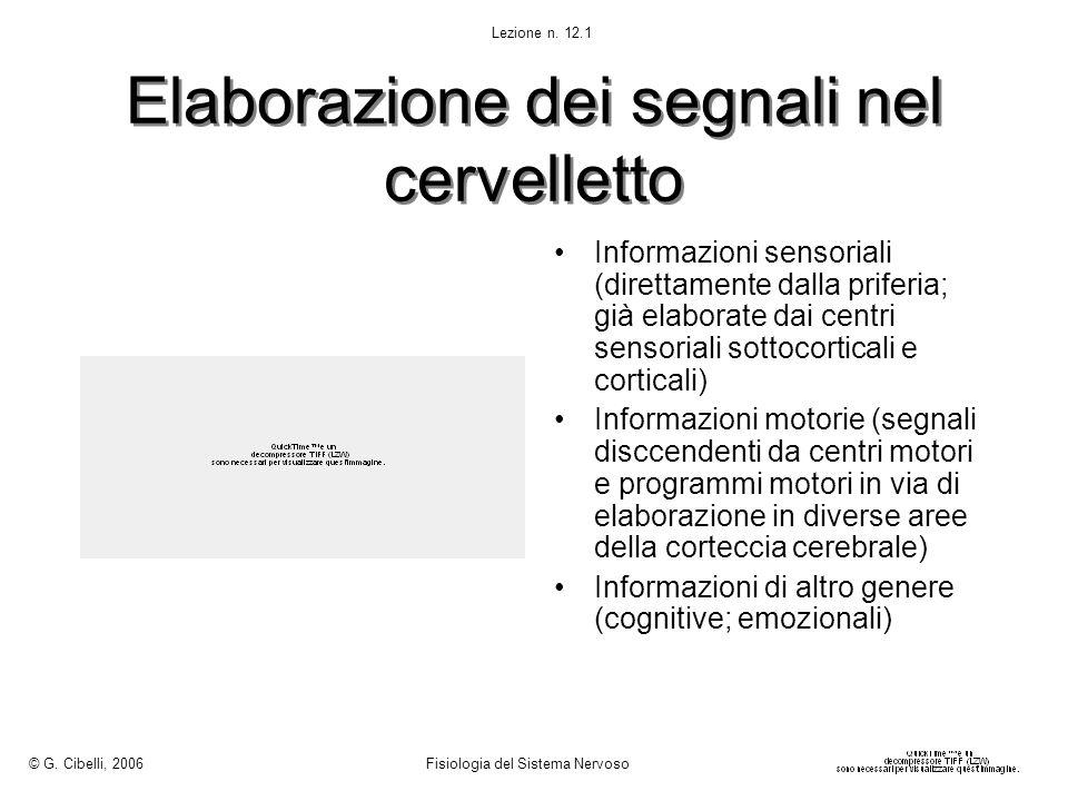 Elaborazione dei segnali nel cervelletto Informazioni sensoriali (direttamente dalla priferia; già elaborate dai centri sensoriali sottocorticali e co