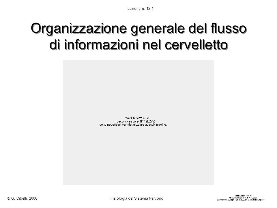 Organizzazione generale del flusso di informazioni nel cervelletto © G. Cibelli, 2006 Fisiologia del Sistema Nervoso Lezione n. 12.1