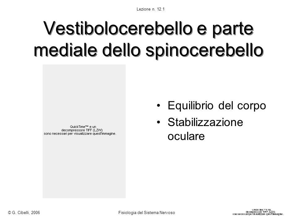 Vestibolocerebello e parte mediale dello spinocerebello Equilibrio del corpo Stabilizzazione oculare © G. Cibelli, 2006 Fisiologia del Sistema Nervoso
