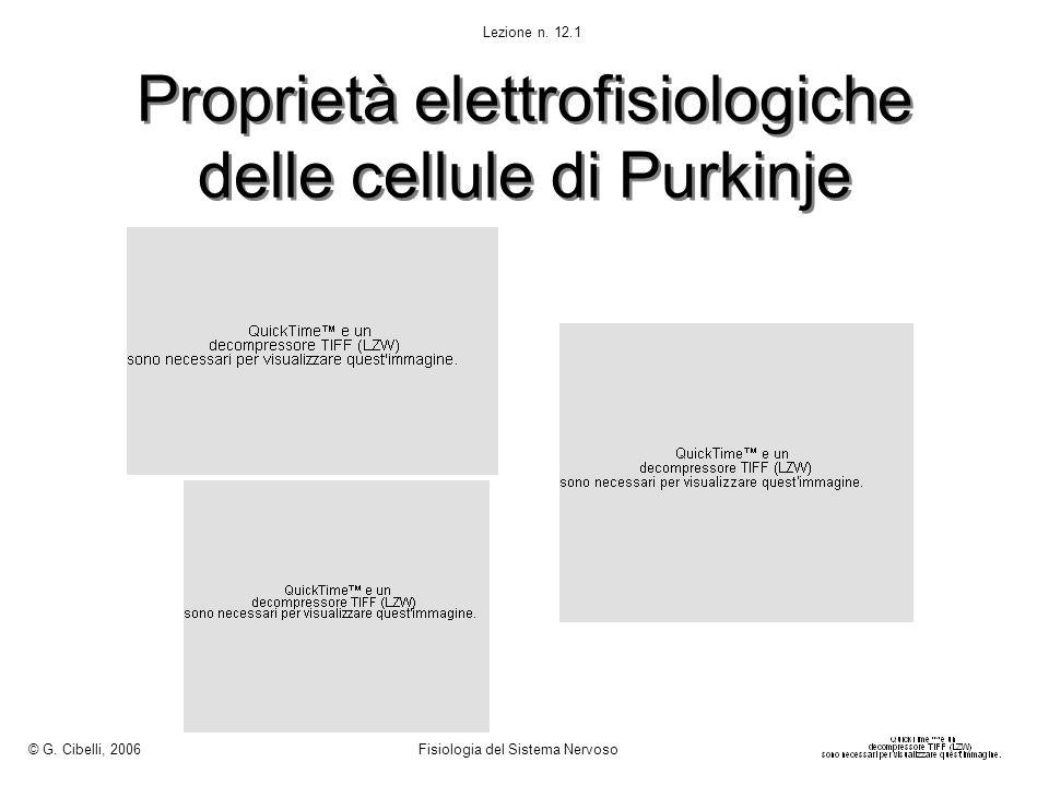 Proprietà elettrofisiologiche delle cellule di Purkinje © G.
