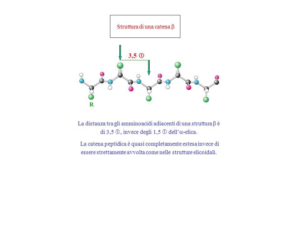 Struttura di una catena Struttura di una catena R La distanza tra gli amminoacidi adiacenti di una struttura è di 3,5, invece degli 1,5 dell -elica.